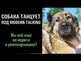 Собака танцует под Modern Talking. Вы все еще не верите в реинкарнацию?