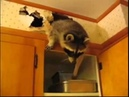 Cute raccoon wants to make cupcakes but mean home owner doesn't let him