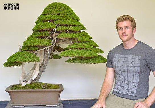 Бонсай — это как домашнее животное, только дерево...