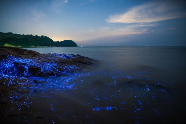 Одно из самых восхитительных зрелищ, которое можно увидеть ночью на берегу моря свечение биолюминесцентных креветок Это такое же захватывающее зрелище, как и наблюдение за звездопадом: только