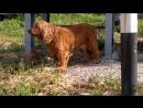 Чей потеряшка Собаке нужна помощь Звоните 89515155730