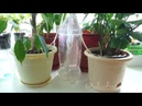 Автополив растений в отпуске Альтернатива фитилю