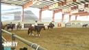 Unos Smokin Chic ridden by Mason Beal 2019 NRCHA Derby Non Pro Limited Derby herd work