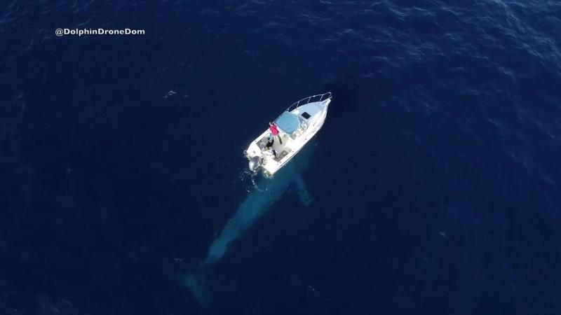 Голубой кит проплыл под лодкой молодоженов в штате Сан-Диего