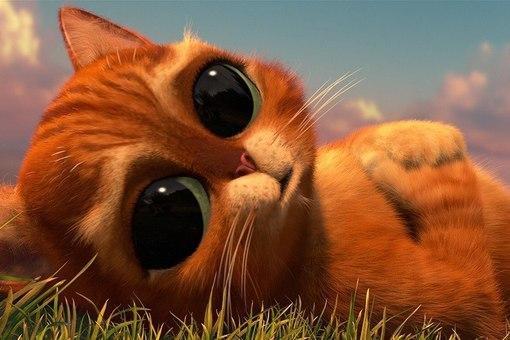 Как назвать рыжего кота мальчика чтобы его имя было