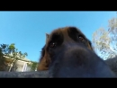 Elusive Dog