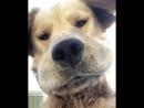Lnsta_doggy ?utm_source=ig_share_sheet igshid=