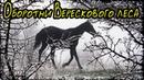 Оборотни Верескового леса Страшная История