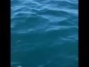 Тихий океан, дельфины 😍