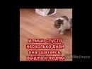 История кошки