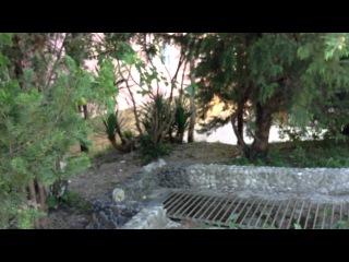 поселок шепси туапсинский район пансионат шепси