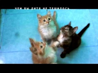 Котята ищут дом и семью)))