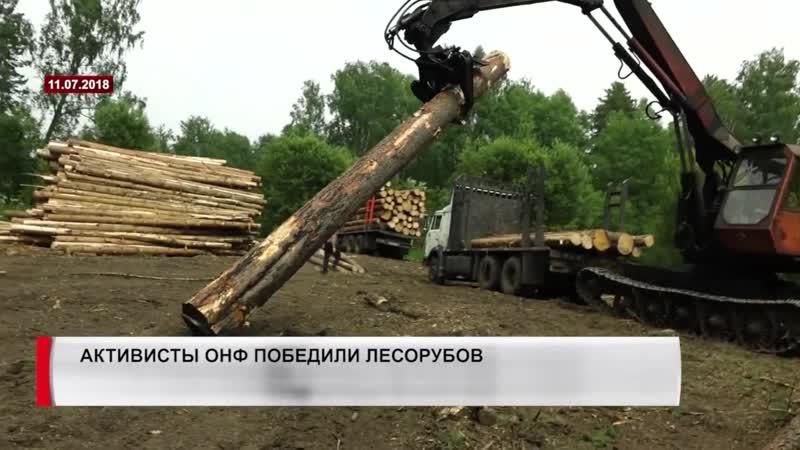 Активисты ОНФ одержали победу над черными лесорубами