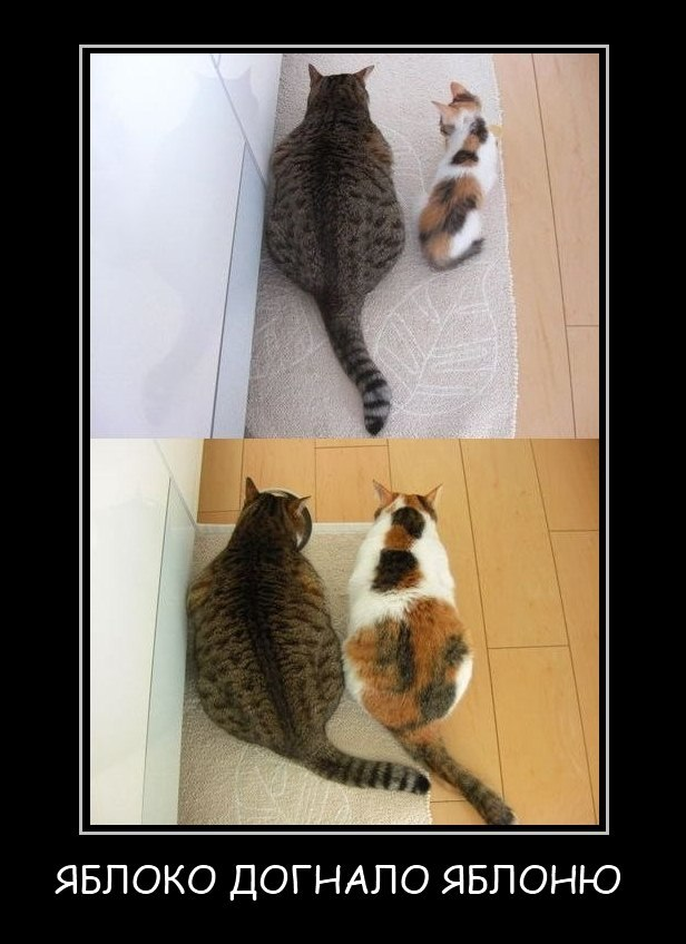 Это котята в дар челябинск знал