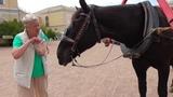 Любимая лошадь Лолита в Павловском парке.