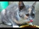 Affectionate kitty asked to feed her Ласковая кошечка попросила покормить ее