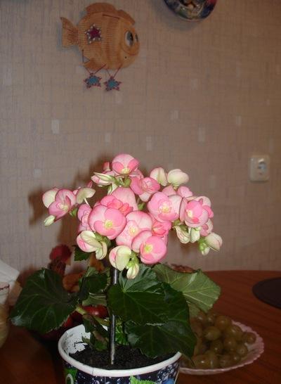 Людмила Игнатова, 1 марта , Новосибирск, id182119331
