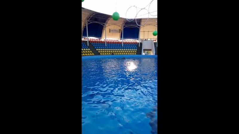 машуля и дельфины