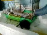 Прикольная мышка песчанка