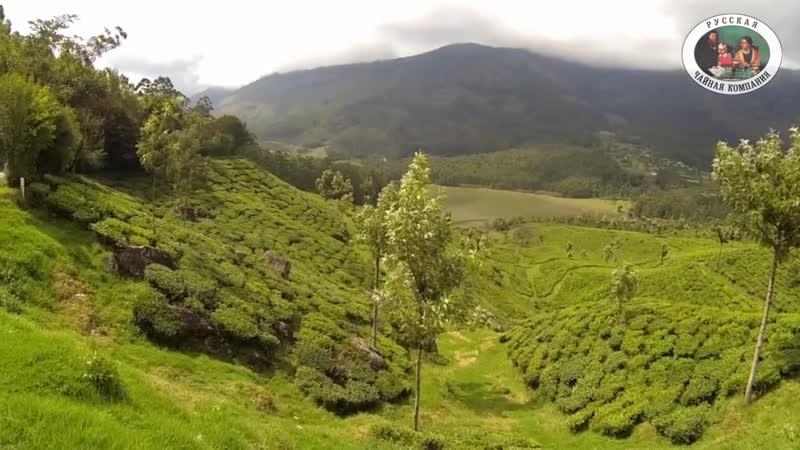 Индийский чай регионы Ассам, Дарджилинг плантации Баласун, Меленг, Мангалам