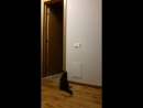 Отбой (VHS Video)