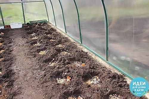 Томат нуждается в большом количестве удобрений, но нужно знать: что класть в лунку высаживая помидоры, как подготовить грунт и чем его удобрить