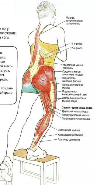 Упражнения на заднюю мышцу бедра в домашних условиях