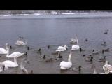 Это был воскресный день - Поездка на озеро лебяжье