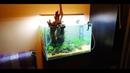 Оформление аквариума Аквариумные растения Маши Блюм