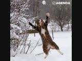 Питомцы радуются первому снегу