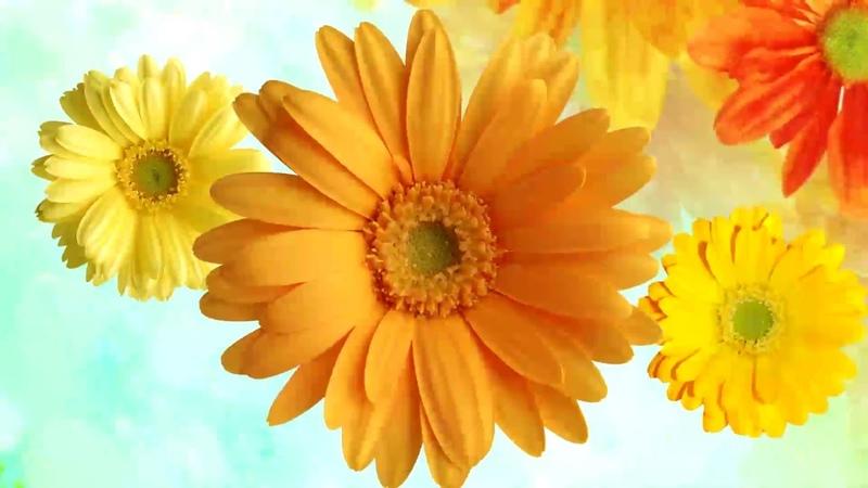 Яркий цветочный фон футаж