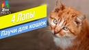 Консервы для кошек Клуб 4 лапы Обзор паучей для кошек Клуб 4 лапы Club 4 Paws fore cats review