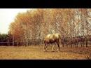 Beautiful Horses Лошади красивый клип