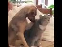 Как правильно гладить кота