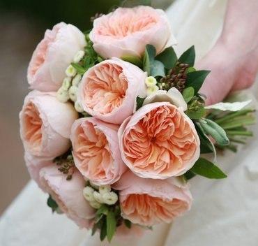Роза дэвида остина сорта