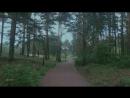 Гипнотическая сила ☔️ afterrain rain forest