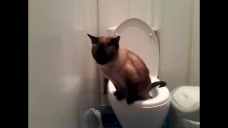 моя Муся,самая умная кошка в мире!