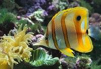 """Предпросмотр схемы вышивки  """"аквариум """". аквариум, рыба, аквариум, водоем, подводный мир, предпросмотр."""