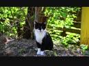 Кошка (cat) футаж