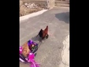 Петух катает курицу