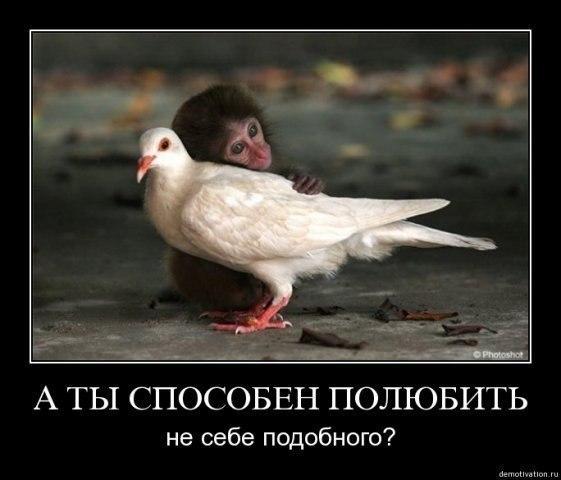 Куча приколов