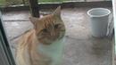 Кот в лёгком шоке-чего там хозяева бандер шоу смотрят.
