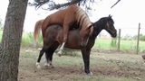 Horse artificial insemination nature fertilization breeding mating stallion childbi