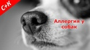Аллергия у собак Что делать