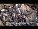 Один день из жизни рыбака на Малом Арале