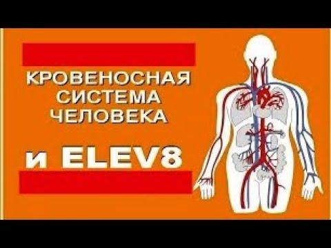 ПРОДУКТ ELEV8 И КРОВЕНОСНАЯ СИСТЕМА Врач Н. Андреева