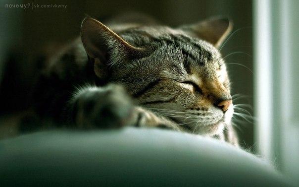Почему кошка спит на человеке