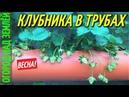 КЛУБНИКА В ТРУБАХ-2018.ВЫРАЩИВАНИЕ КЛУБНИКИ В ТРУБАХ.
