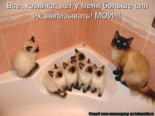 http://cs323229.vk.me/v323229625/17e/m1uprALHMhs.jpg