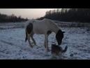 Встреча Зевса с лошадью